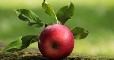 התפוח