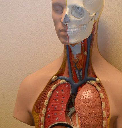 מערכת נשימה
